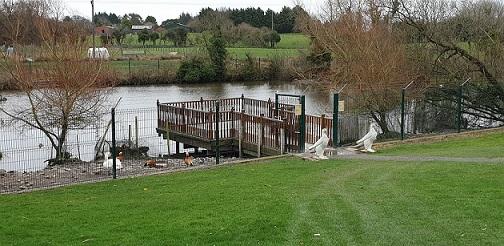 The Ark Open Farm duck pond